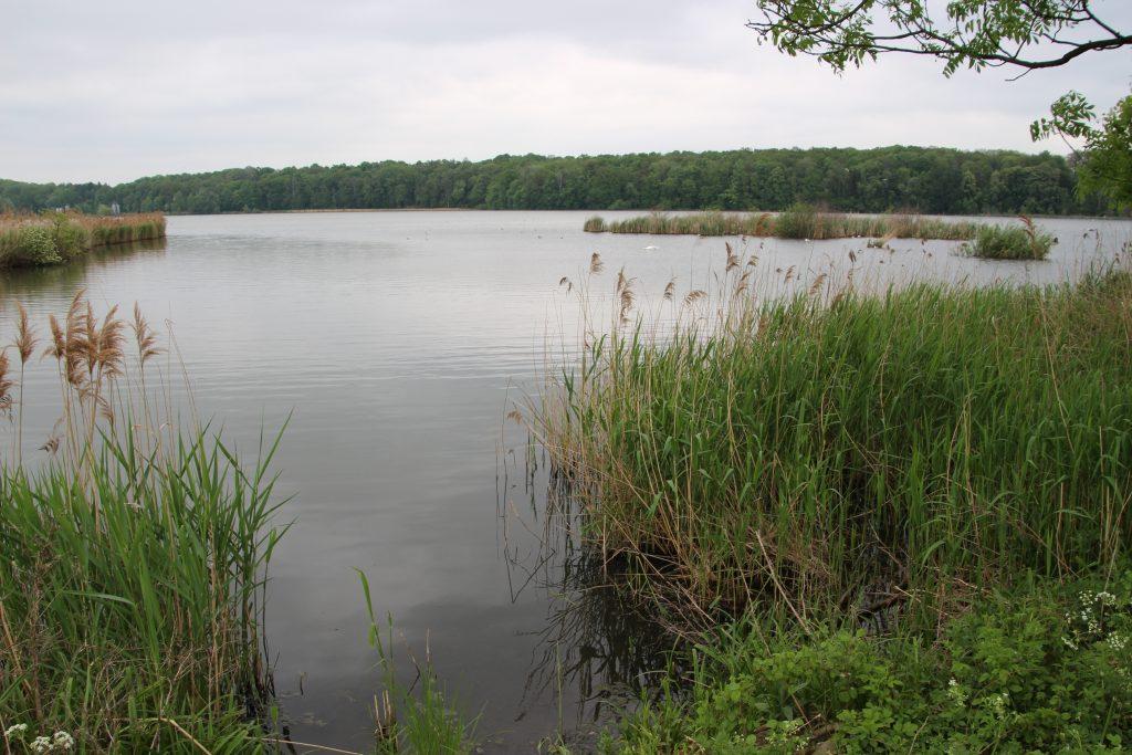rybník Kotvice