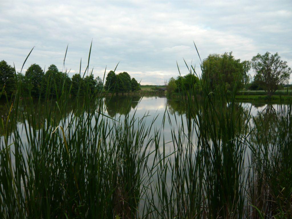 Šeberovské rybníky