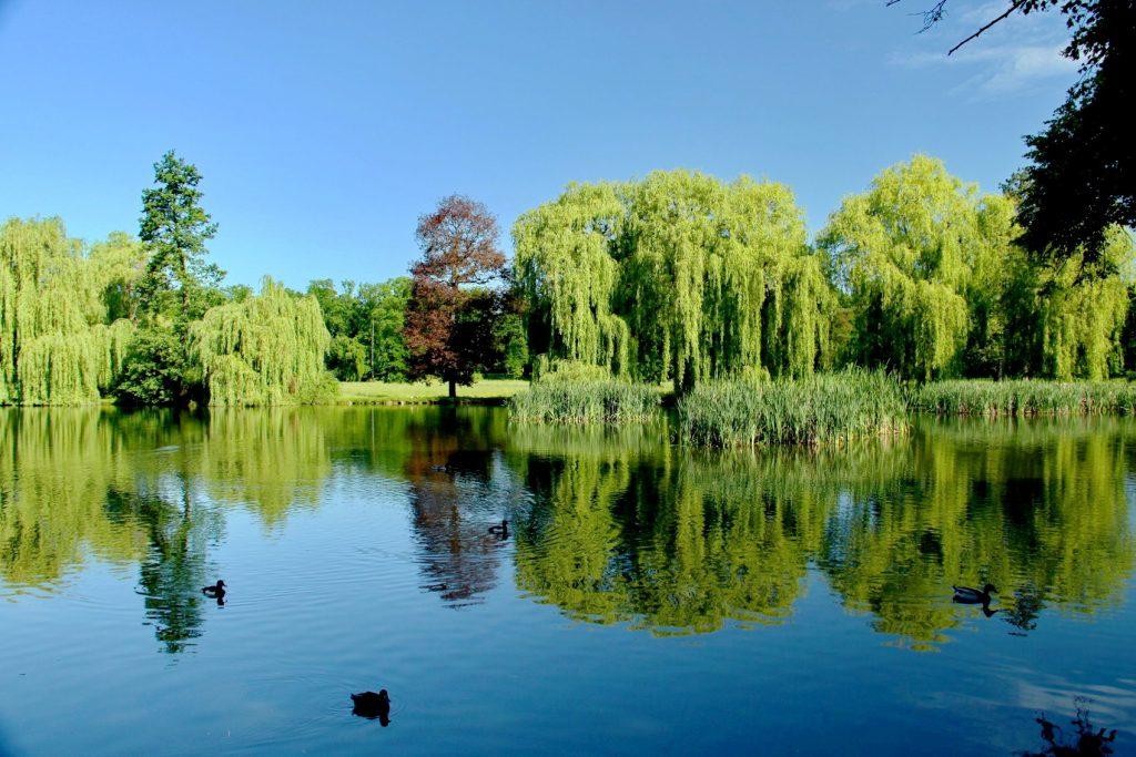 Královská obora Stromovka rybník