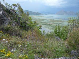 Skadarské jezero Černá Hora