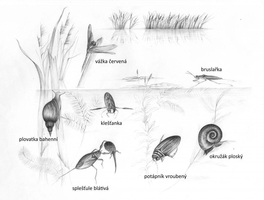 Živočichové vtůních. Autor kresby: Alice Janečková