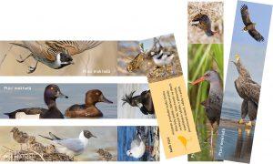 Záložky ptáci mokřadů