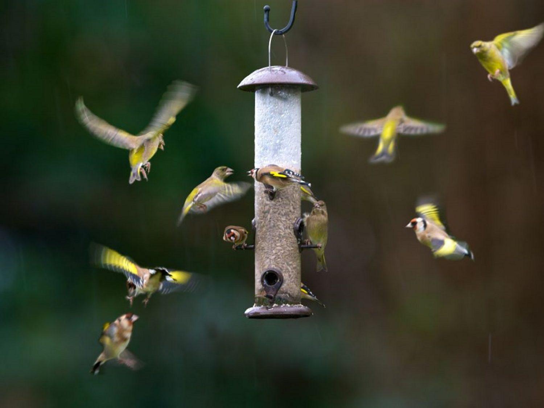 velké masivní ptáky