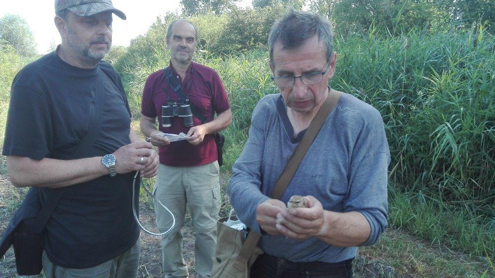 Hnízdní mapování v CHKO Křivoklátsko podpořily i odchytové akce