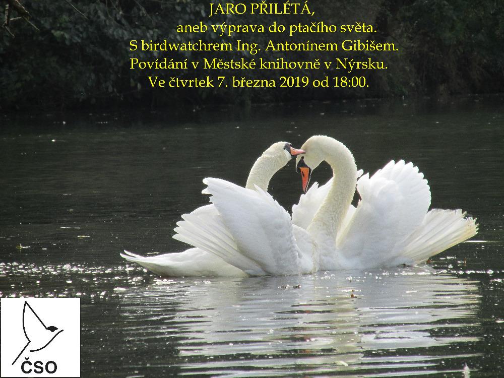 pozvánka na přednášku o ptácích v Nýrsku