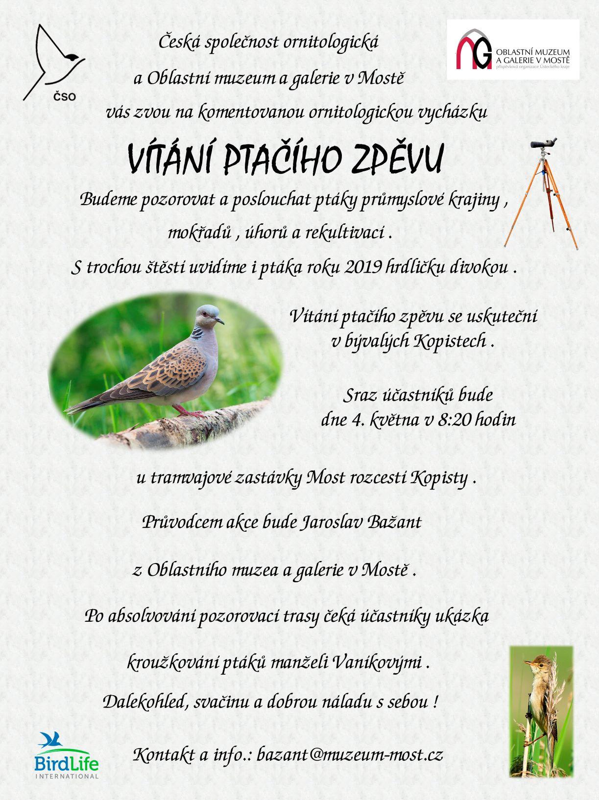 Velké ptáky galerie