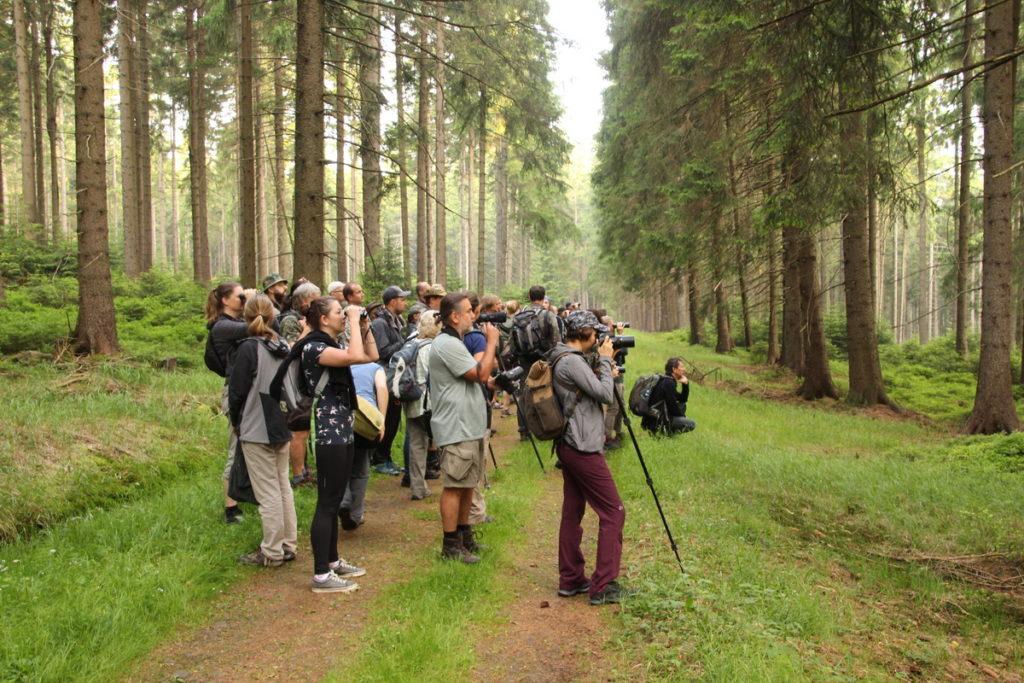 pozorování mláďat čápů černých v NP Stolové hory