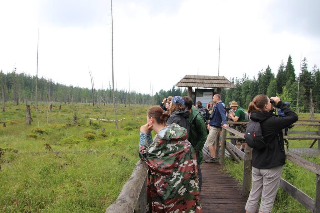 lidé pozorující ptáky na dřevěném chodníku na rašeliništi pod Zieleńcem