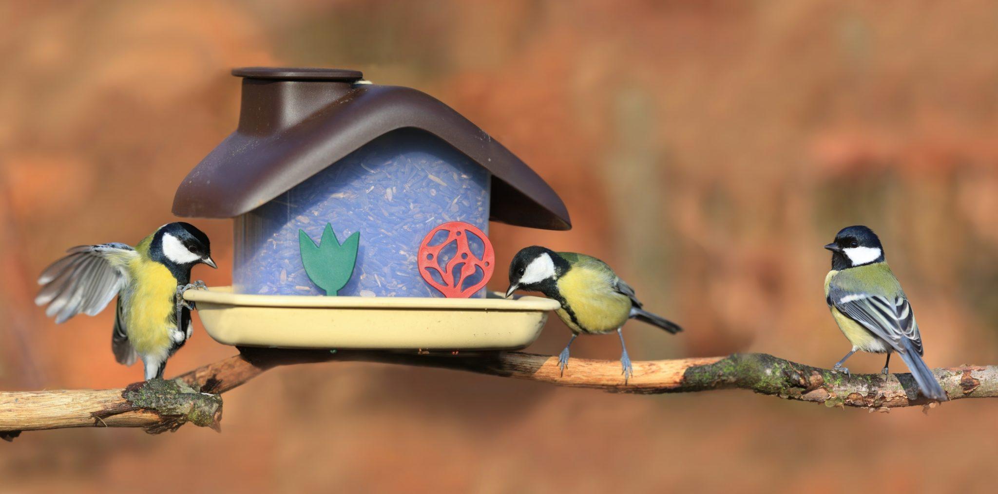 Videa z obrovských ptáků zdarma