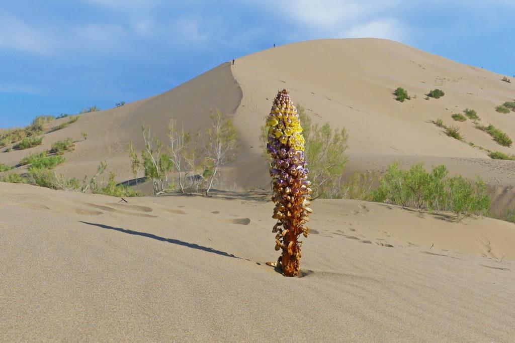 duna v polopoušti