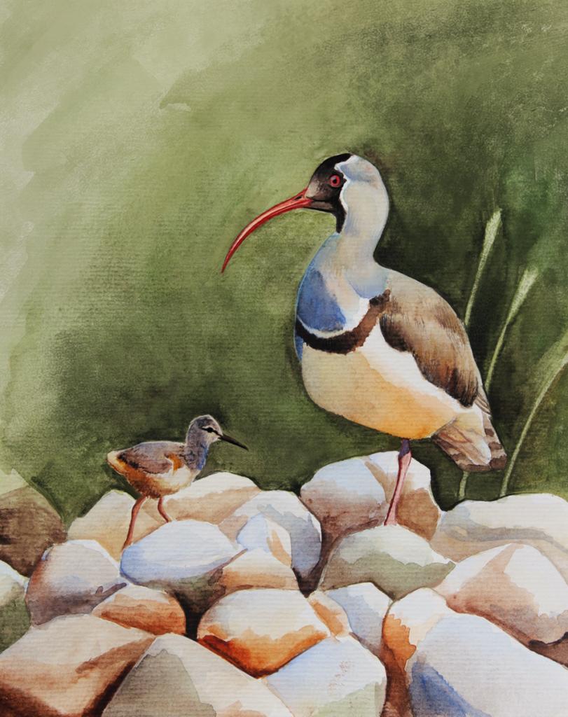 srpatka ibisovitá